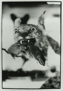 In a black-and-white photo, a leaping cat's face is in focus, piercing a shrieking rodent with its fangs.