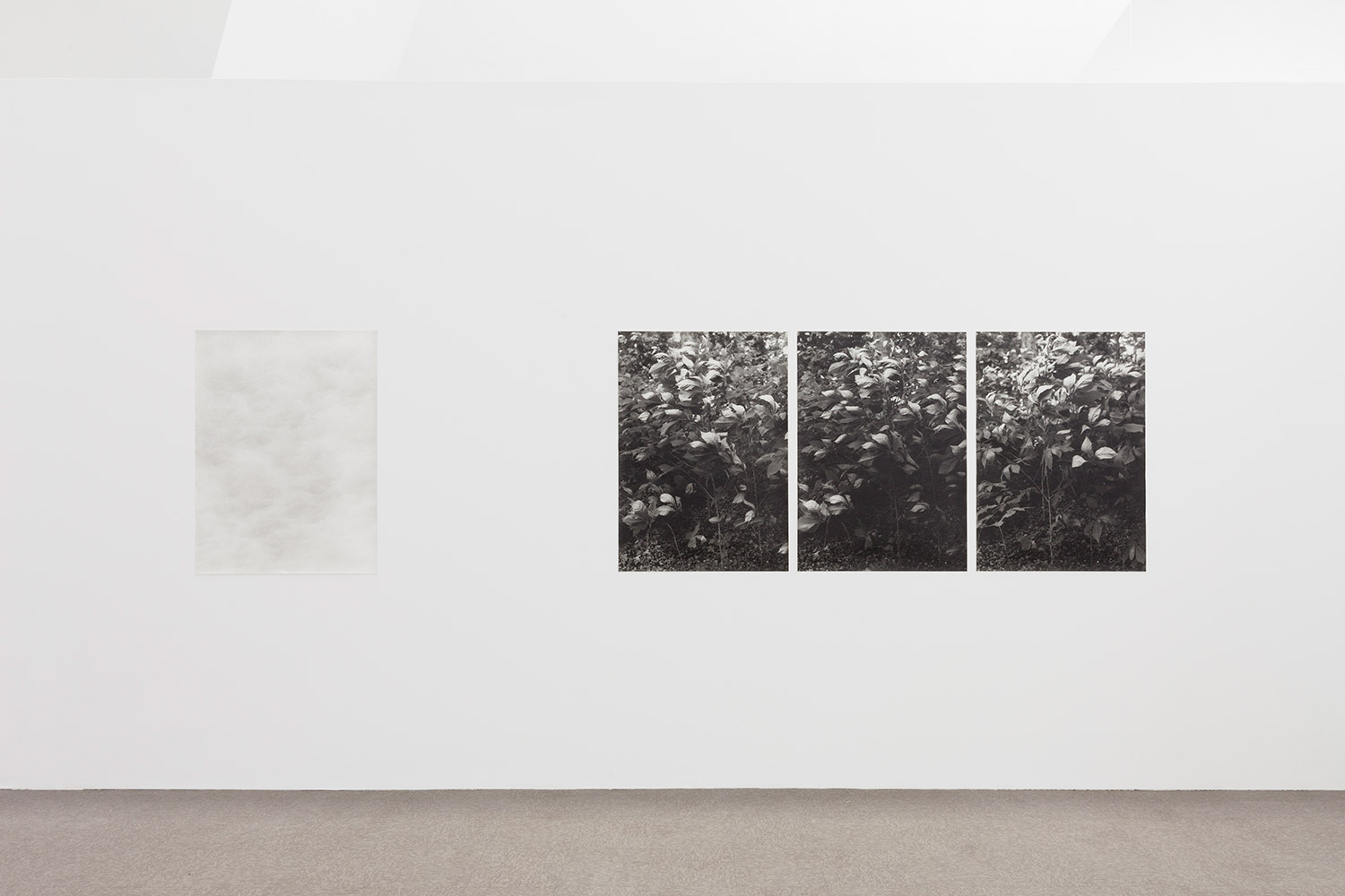 Two printed works hanging on a wall, one of clouds faintly distinct from the wall, the other a triptych of leaves from a bush